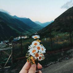 #daisy #flowers