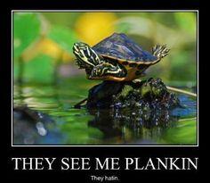 Turtle Planking haha