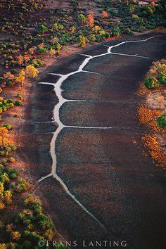 Hippo trails in dry-season lagoon (aerial), Luangwa Valley, Zambia