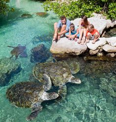Nature Lovers | Xcaret, Natural Paradise of the Riviera Maya                                                                                                                                                                                 More