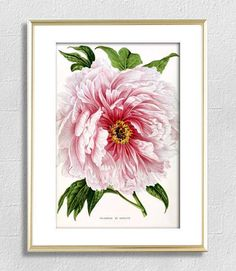 Flower printable flowers wall art decor flowers illustration