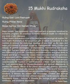 15 Mukhi Rudraksha..