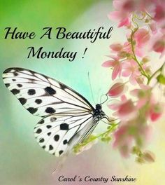Have a beautiful Monday, my friend!