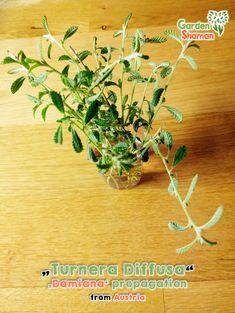 Propagation, Herbs, Garden, Plants, Garten, Lawn And Garden, Herb, Gardens, Plant