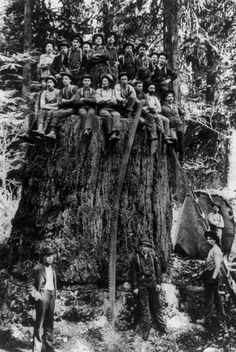 Black and white image of a large group of lumberjacks on a huge stump of a tree which was displayed at St. Louis Worlds Fair, 1904.