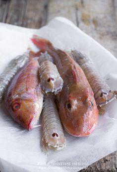 brodetto-di-pesce