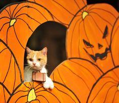 にゃらん @nyalan_jalan  10月31日 ハロウィンの仮装どうしようかにゃ〜 #Halloween