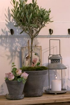 Pots Potted Plants, Garden Plants, Let It Burn, Organizing Your Home, Topiary, Outdoor Gardens, Color Schemes, Sweet Home, Herbs