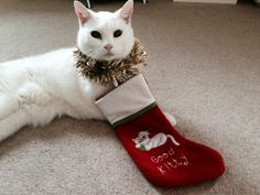 My pussy cat sammy years young) with his good kitty Christmas stocking. Christmas Star, Father Christmas, All Things Christmas, Christmas Themes, Holiday Decor, Paper Cards, Paper Gifts, Cat Themed Gifts, Hobbies And Crafts