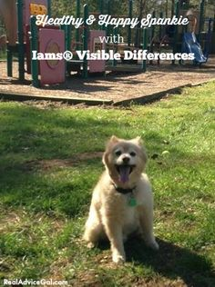 Check out how happy and healthy Spankie is with Iams® Dog Food #IamsDifference  #ad