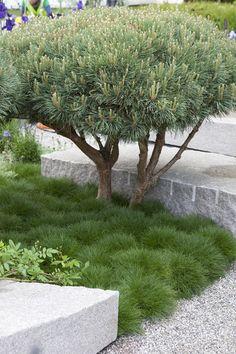 Japanese Garden Theme For A Getaway In Your Own Backyard Modern Landscaping, Backyard Landscaping, Small Gardens, Outdoor Gardens, Amazing Gardens, Beautiful Gardens, Planting Plan, Japanese Garden Design, Australian Garden