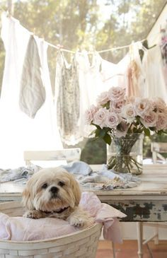 1000+ images about ~LaUnDry DaY~ on Pinterest