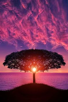 Happiness & peacefulness just looking at this.  ~SG  Amazing picture: tree, sunset & sky