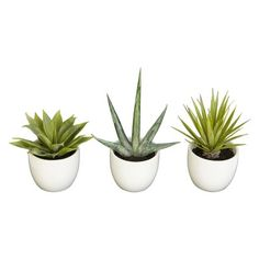 Southwest Collection Mixed Succulents in White Pots Set of 3 - 8.5"