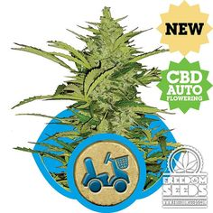 Royal Queen Seeds - Fast Eddy Automatic Fem Seeds