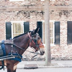 A Bit of Charleston South Carolina, Charleston, Wander, Travel Guide, Traveling By Yourself, Horses, Animals, Instagram, Animaux