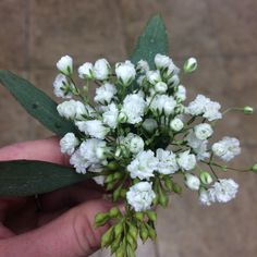 #SunshineDesigns #boutonniere featuring baby's breath and seeded eucalyptus greens. #5elevenPalafox #5eleven #5elevenPalafoxWedding #5elevenWedding #PensacolaFlorist #PensacolaWeddingFlorist