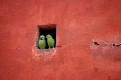 New Delhi, India by Adam Green