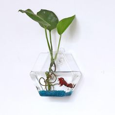Hexagon Wall Hanging Glass Plant Hydroponic Hanging Wall Vase – In House Jungle