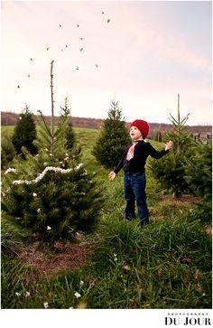 Christmas Tree farm photos