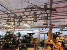 Love these lanterns hanging from a real tree branch in Sickles Market Greenhouse