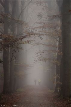 the mist erious wood - null