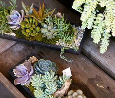 Succulent Arrangements | Rolling Greens