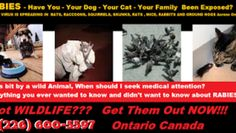 (226) 600-5597 RABIES - HAVE YOU - YOUR DOG - YOUR - CAT - YOUR FAMILY BEEN EXPOSED