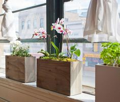 The Modern Sprout planter will take care of all your indoor gardening for you.