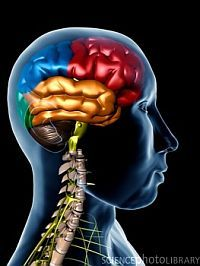 PsychCentral: Brain Can Instantly Skew Perception