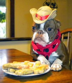 You can choose from a great selection of homemade treats for your babies at my website at www.ksbulldogs.com or through my facebook page at K S Bulldogs Dog Treats. :)