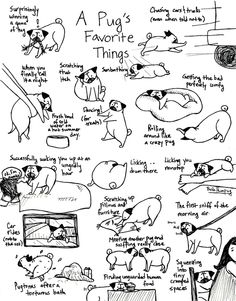 Pug life. Thanks to my SIL for sharing!