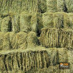#AlfalfaHay #Hay #eTradePakistan #WholesaleAlfalfahay #Animalfeed #feed #wholesaleanimalfeed Hay For Sale, Alfalfa Hay, E Trade, Arkansas, Coastal, Tack, Animals, Horses, Animales