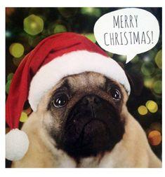 Pug Christmas card at www.ilovepugs.co.uk limited stock post worldwide