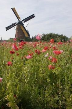 Summer - Zeeland in july. Dutch windmill in a poppy field, the Netherlands Tilting At Windmills, Old Windmills, Netherlands Windmills, Holland Netherlands, Water Tower, Le Moulin, Covered Bridges, Amsterdam, Poppies