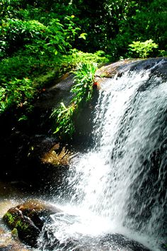 Praia da Tapera Nature Photography, Waterfall, Rios, Places, Green, Travel, Outdoor, Terra, Landscapes
