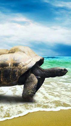 Large Sea Tortoise