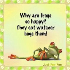 Frogs are happy . . .