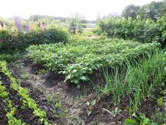 Kuvahaun tulos haulle palsta viljely