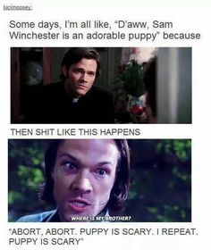 Find images and videos about funny, supernatural and Jensen Ackles on We Heart It - the app to get lost in what you love. Supernatural Imagines, Funny Supernatural Memes, Supernatural Bloopers, Supernatural Tattoo, Supernatural Wallpaper, Supernatural Pictures, Spn Tattoo, Sam Dean, Supernatural Fandom