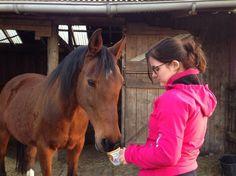 Home - Equi-unique, pedagogische begeleiding en psychosociale hulpverlening met behulp van paarden