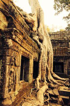 Cambodia Ta Prohm temple