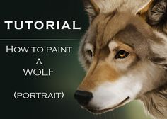 Tutorial: How To Paint A Wolf by cerona.deviantart.com