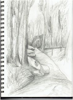 Forest drawings