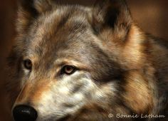 The Most Beautiful Wolf I Have Ever Seen...The Color is Stunning...