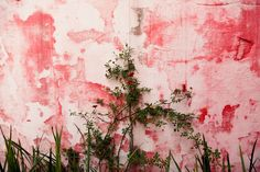 perfect pink wall, the selby