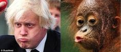 Huff and puff: A red-faced Boris blows out his cheeks alongside a baby ape