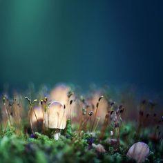 Basidiomycota  by Sebastian-Alexander Stamatis