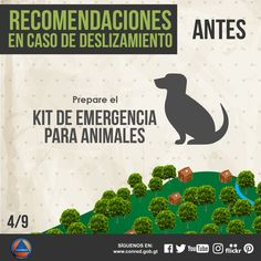 Prepare el kit de emergencias para animales.
