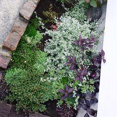 +laboratory(ラボラトリ)さんはInstagramを利用しています:「お店のさび小庭。 2ヶ月たたないうちにもっりもりになりました。 段階的に小さなお花も咲いていき、土の部分が緑で覆われていき、その間には毎日ぴょっこりと雑草が顔を出します。 オープンの日もクローズの日も、毎日が大切だと実感します☺︎」